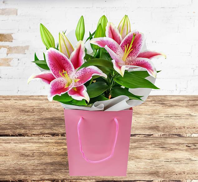 Luxury Lily Plant
