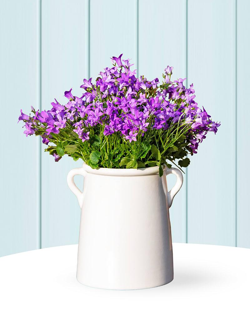 Purple Campanula Tankard