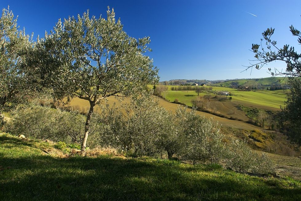 Image 5 | 10 bedroom hotel for sale with 11 hectares of land, Tolentino, Macerata, Marche 186180