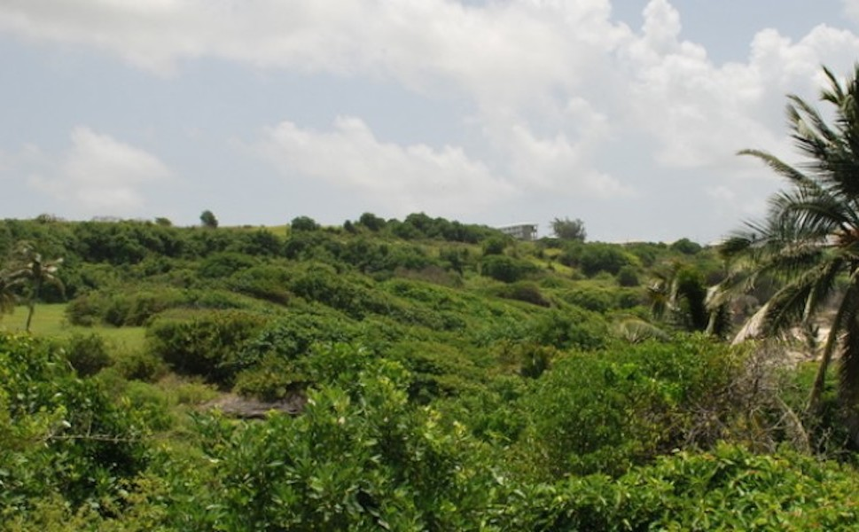 Image 3 | Plot of land for sale with 13.35 hectares of land, Christ Church 194374