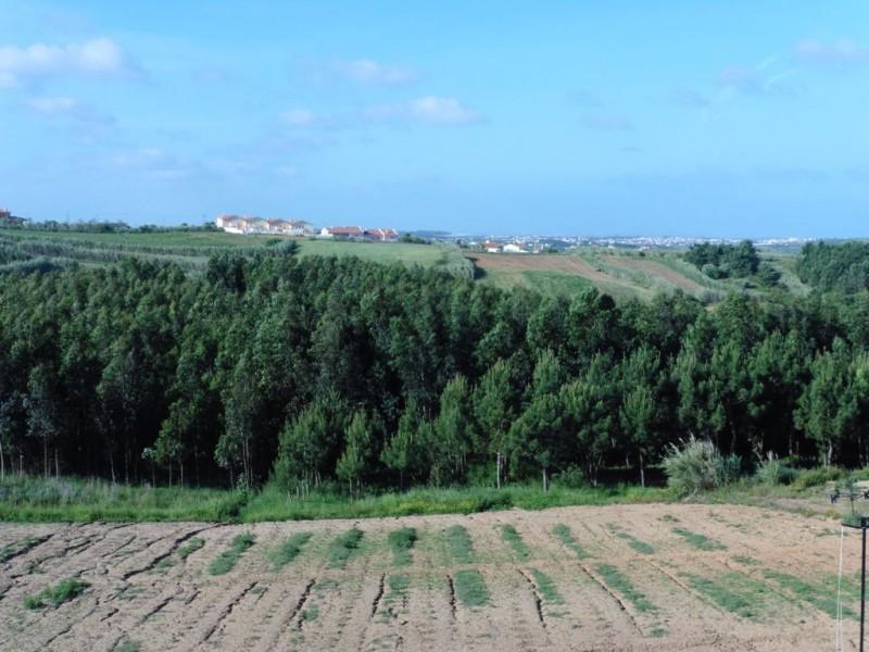 Image 15 | 4 bedroom villa for sale with 1,691m2 of land, Lourinha, Lisbon District, Costa de Prata Silver Coast 196236
