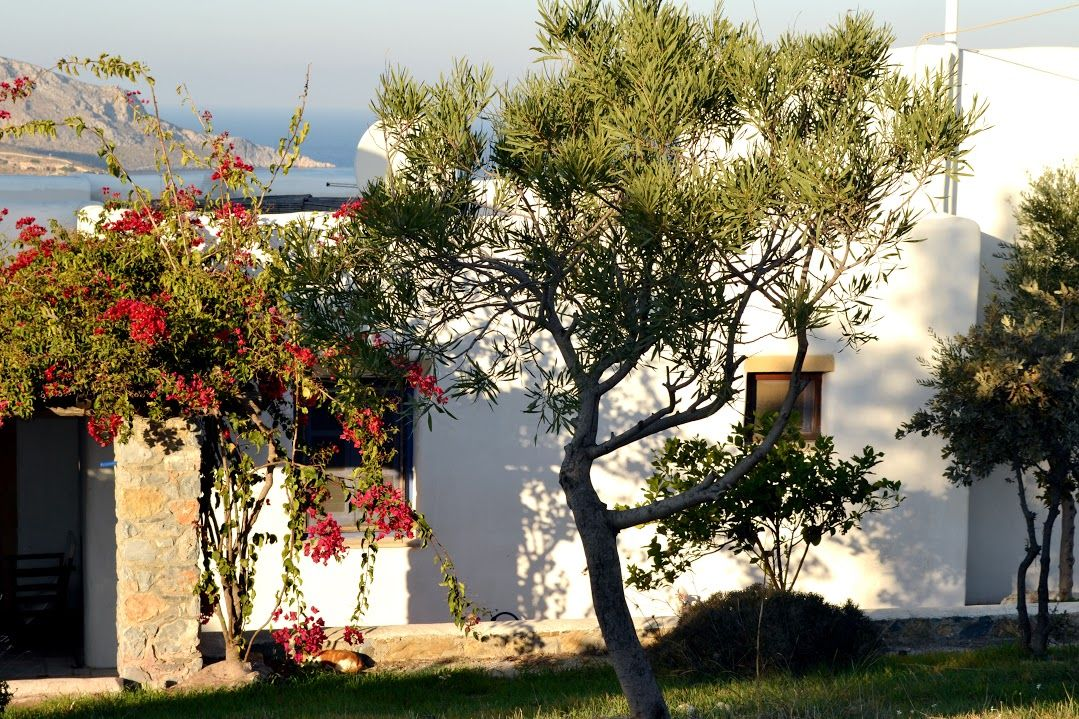 Image 20 | Lovely Character  Villa with 5 Bedrooms for Sale in Leros, Greece 199246