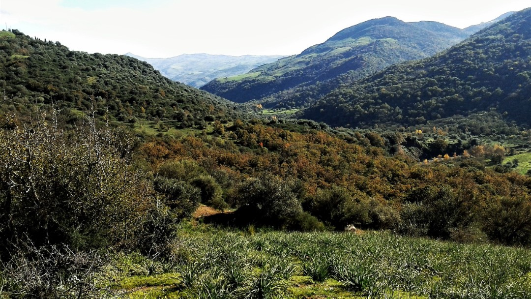 Image 14   20 bedroom farmhouse for sale with 65 hectares of land, San Mauro Castelverde, Palermo, Sicily 204621