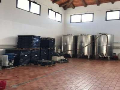 Image 13 | Superb Family Run Winery for Sale in Alba with Productions of Nebbiolo, Barbera, Dolcetto & Arneis 209723
