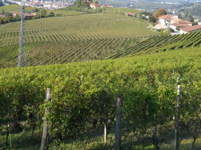 Image 2 | Superb Family Run Winery for Sale in Alba with Productions of Nebbiolo, Barbera, Dolcetto & Arneis 209723