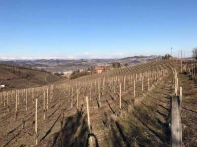 Image 4 | Superb Family Run Winery for Sale in Alba with Productions of Nebbiolo, Barbera, Dolcetto & Arneis 209723