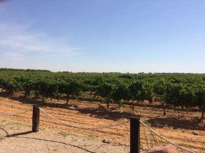 Image 10 | 6 bedroom farmhouse for sale with 4.32 hectares of land, Arenales de San Gregorio, Ciudad Real, Castile-La Mancha 209801