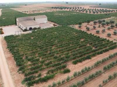 Image 3 | 6 bedroom farmhouse for sale with 4.32 hectares of land, Arenales de San Gregorio, Ciudad Real, Castile-La Mancha 209801