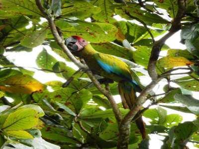 Image 26   Boutique Lodge in Tropical Botanical Gardens in Costa Rica 214184