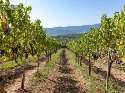 Image 11   5 bedroom farmhouse for sale with 11.94 hectares of land, Montecatini Val di Cecina, Pisa, Tuscany 214487