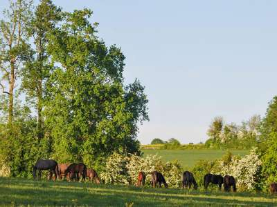 Image 6 | Superb Equestrian French Chateau with Stud Farm for Sale in Normandy, France with 300 acres  217843