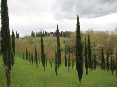 Image 4 | 3 bedroom farmhouse for sale with 13 hectares of land, Peccioli, Pisa, Tuscany 220061
