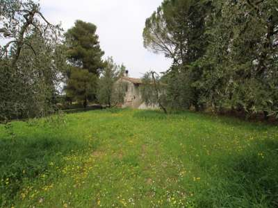 Image 5 | 3 bedroom farmhouse for sale with 13 hectares of land, Peccioli, Pisa, Tuscany 220061