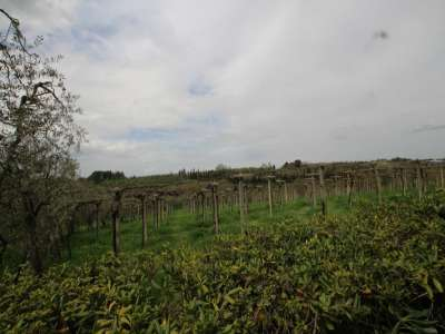 Image 7 | 3 bedroom farmhouse for sale with 13 hectares of land, Peccioli, Pisa, Tuscany 220061