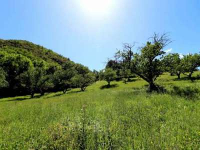 Image 3 | 7 bedroom farmhouse for sale with 64.76 hectares of land, Vallespir Area, Pyrenees-Orientales , Pyrenees Vallespir 223749