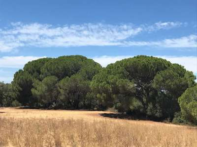 Image 3   Generous Plot of Land for Sale in Alentejo, Portugal, with Plans for  a 18 Suite Boutique Hotel 223991
