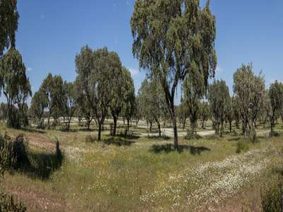 Image 7   Generous Plot of Land for Sale in Alentejo, Portugal, with Plans for  a 18 Suite Boutique Hotel 223991