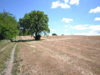 Image 3 | 50 bedroom farmhouse for sale with 100 hectares of land, Orvieto, Terni, Umbria 224111