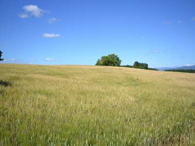 Image 4 | 50 bedroom farmhouse for sale with 100 hectares of land, Orvieto, Terni, Umbria 224111