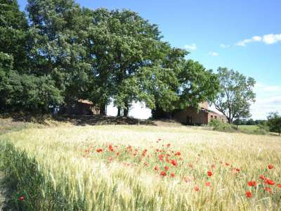 Image 6 | 50 bedroom farmhouse for sale with 100 hectares of land, Orvieto, Terni, Umbria 224111