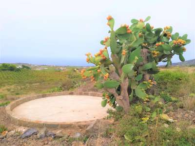 Image 23   2 bedroom villa for sale with 0.4 hectares of land, Pantelleria, Trapani, Sicily 224352