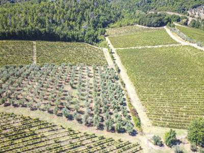 Image 5   4 bedroom farmhouse for sale with 27.6 hectares of land, Greve in Chianti, Florence, Chianti Wine Region 225842