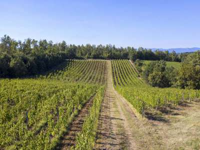 Image 7   4 bedroom farmhouse for sale with 27.6 hectares of land, Greve in Chianti, Florence, Chianti Wine Region 225842