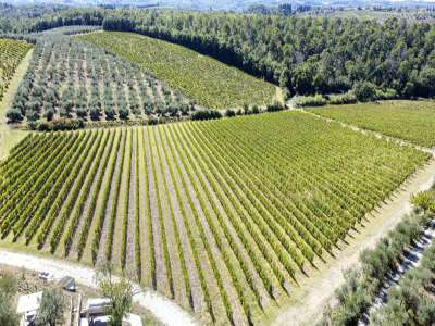 Image 29   16 bedroom house for sale with 44 hectares of land, San Casciano in Val di Pesa, Florence, Chianti Wine Region 226227