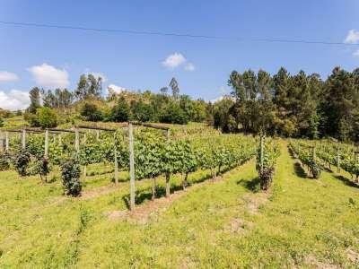 Image 23   5 bedroom villa for sale with 6.73 hectares of land, Sobrado E Bairros, CASTELO DE PAIVA, Aveiro District, Central Portugal 229536