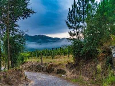 Image 26   5 bedroom villa for sale with 6.73 hectares of land, Sobrado E Bairros, CASTELO DE PAIVA, Aveiro District, Central Portugal 229536