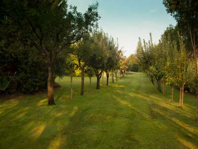 Image 18   4 bedroom villa for sale with 14,000m2 of land, Lake Garda, Mantua, Lombardy 216874