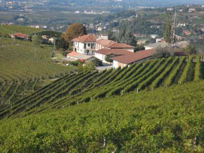 Superb Family Run Winery for Sale in Alba with Productions of Nebbiolo, Barbera, Dolcetto & Arneis