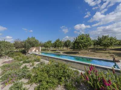 Beautiful Equestrian Estate for Sale in Mallorca with Arenas and Pool for the Horses.