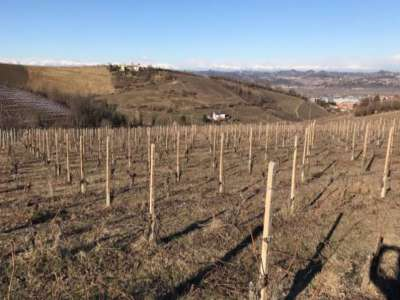 Image 5 | Superb Family Run Winery for Sale in Alba with Productions of Nebbiolo, Barbera, Dolcetto & Arneis 209723