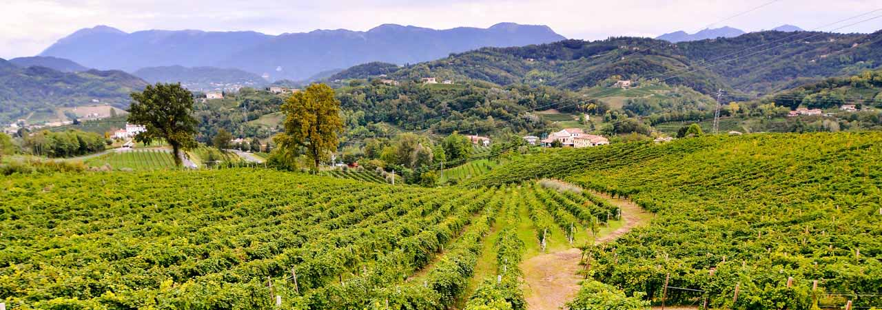 Spanish Vineyard Properties