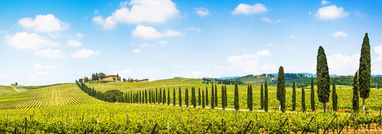 Italian Vineyard Properties