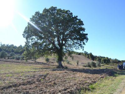 Image 1   Farmhouse for sale with 200 hectares of land, Allerona, Terni, Umbria 195267