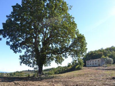 Image 3 | Farmhouse for sale with 200 hectares of land, Allerona, Terni, Umbria 195267