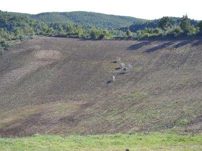 Image 4   Farmhouse for sale with 200 hectares of land, Allerona, Terni, Umbria 195267