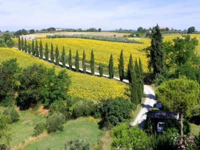 Image 3 | 7 bedroom house for sale with 355m2 of land, San Gimignano, Siena, Chianti 199018