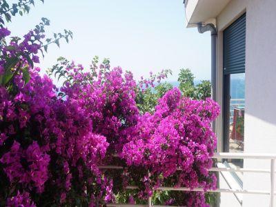 Image 5 | 4 bedroom house for sale, Ulcin, Ulcinj, Coastal Montenegro 200142