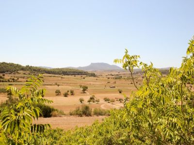 Image 7   Manor House for sale with 50 hectares of land, Lloret, Pina, Central Mallorca, Mallorca 203053