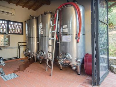 Image 20   Historic Farmstead with Productive Vinyard and Olive Groves for sale in Tuscany with 18 hectares 203334