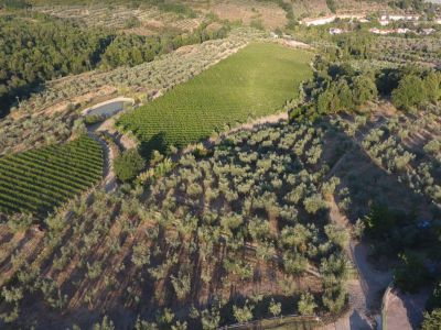 Image 23   Historic Farmstead with Productive Vinyard and Olive Groves for sale in Tuscany with 18 hectares 203334