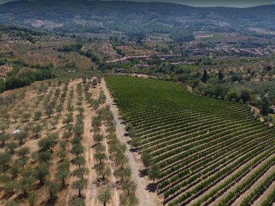 Image 24   Historic Farmstead with Productive Vinyard and Olive Groves for sale in Tuscany with 18 hectares 203334