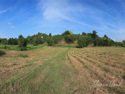 Image 4 | Plot of land for sale with 9.66 hectares of land, Heywoods, Saint Peter 206283