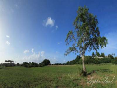 Image 5 | Plot of land for sale with 9.66 hectares of land, Heywoods, Saint Peter 206283