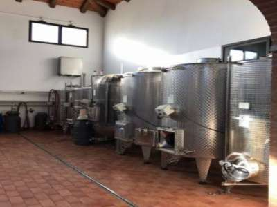 Image 14 | Superb Family Run Winery for Sale in Alba with Productions of Nebbiolo, Barbera, Dolcetto & Arneis 209723
