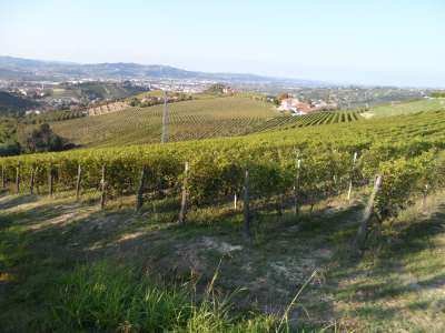 Image 3 | Superb Family Run Winery for Sale in Alba with Productions of Nebbiolo, Barbera, Dolcetto & Arneis 209723
