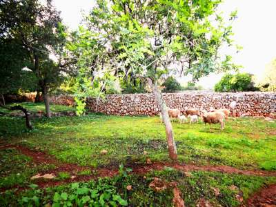 Image 2 | Plot of land for sale with 2 hectares of land, Costitx, Central Mallorca, Mallorca 214109